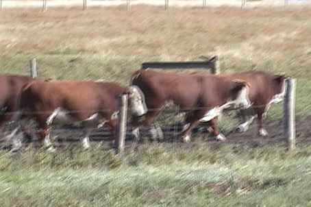 Bulls 2002 homeplace video 2